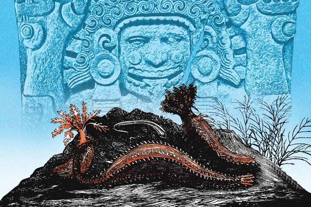 Hallan vestigios de pepinos de mar en ofrenda mexica